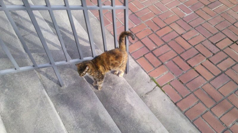 Miss Tichenor Kitty has re-emerged after an unusually harsh winter.